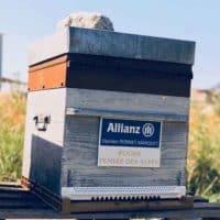 Allianz Damien Perinet Marquet - Pensée des Alpes