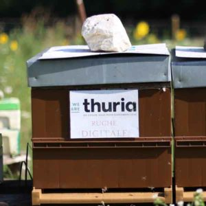 Thuria - Digitale