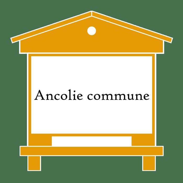 ruche Ancolie commune