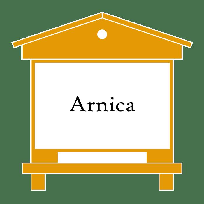 ruche Arnica