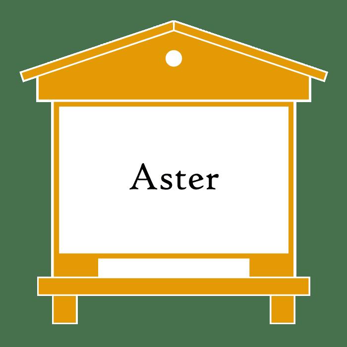 ruche Aster