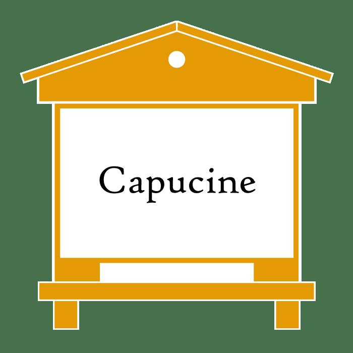 ruche Capucine
