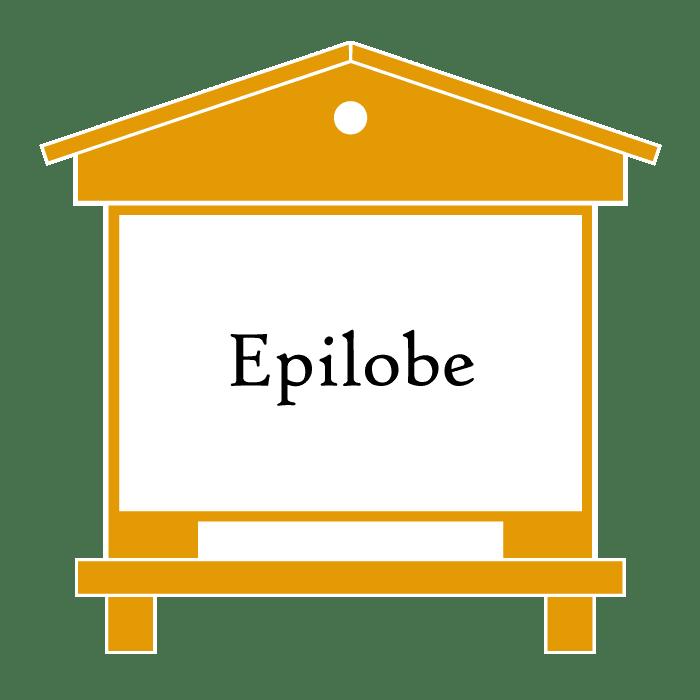 ruche Epilobe