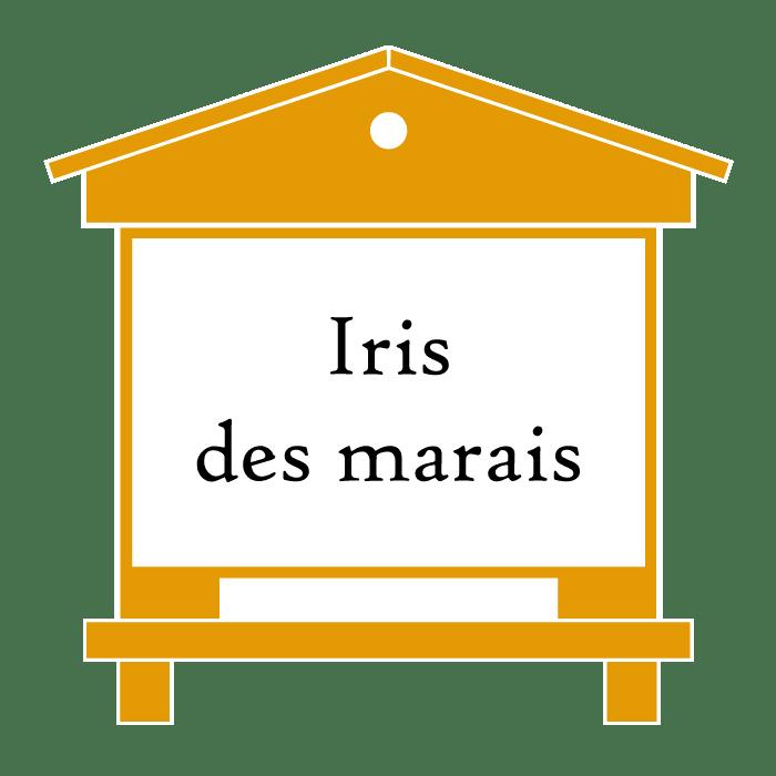 ruche Iris des marais