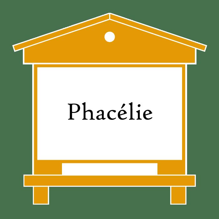 ruche Phacelie