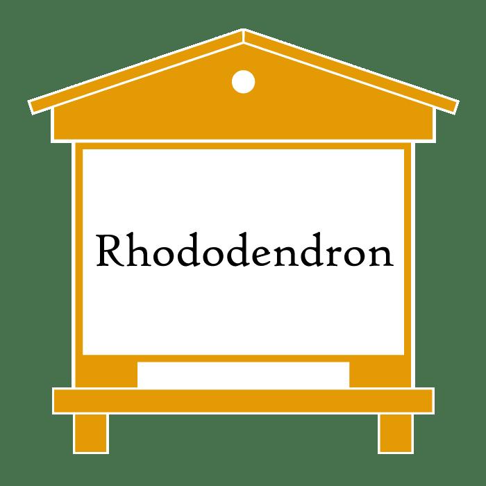 ruche Rhododendron