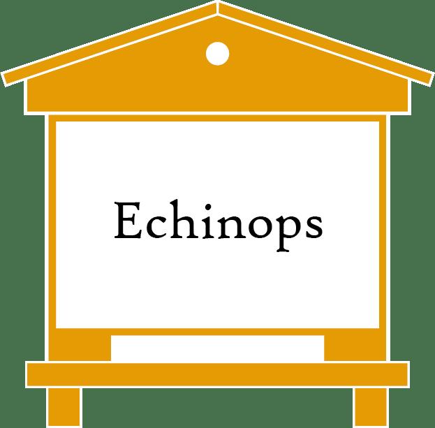 ruche-echinops-produit