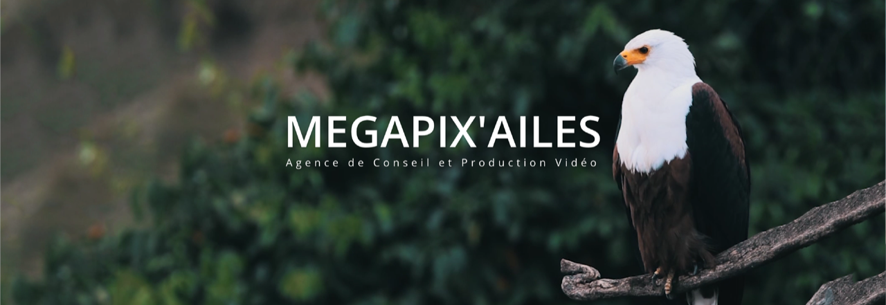 L'entreprise Megapix'ailes mécène 1 ruches avec l'association confidences d'abeilles. Soucieuse de l'environnement, des abeilles,des apiculteurs, elle s'engage pour la biodiversité et l'apiculture française en parrainer une ruche.