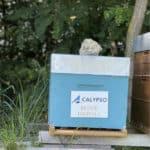 Calypso Technology- Digitale